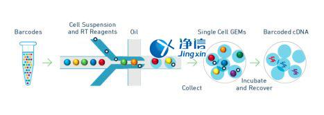 中国人自己的微流控单细胞测序仪来了!_微流控Drop-seq,微流控技术