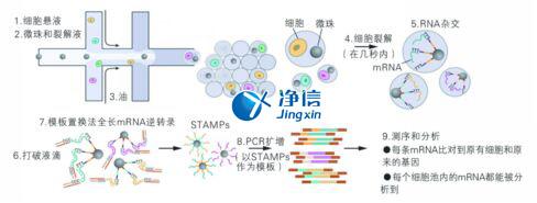 中国人自己的微流控单细胞测序仪来了!_微流控Drop-seq