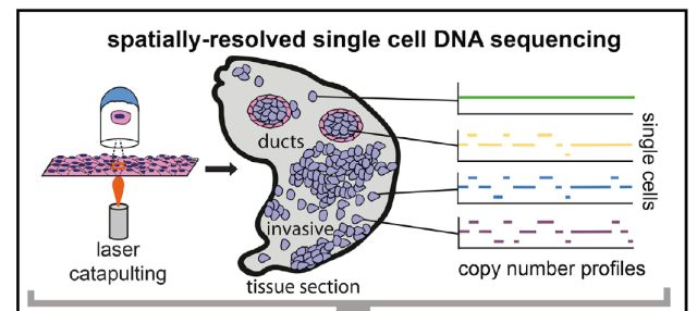 流式样本单细胞悬液的制备方法于讲解