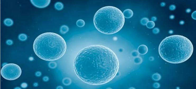 利用Drop-seq单细胞测序技术绘制出复杂动物涡虫的细胞图