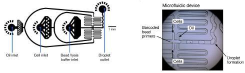 微流体设置,DROP-SEQ