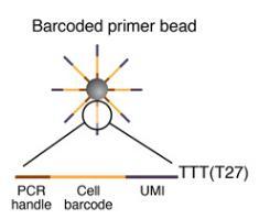 微粒上的引物序列,DROP-SEQ