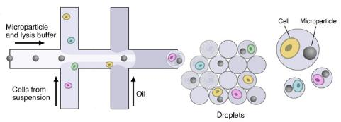 微流体装置,DROP-SEQ