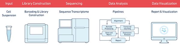 单细胞测序,单细胞测序技术,Drop-seq