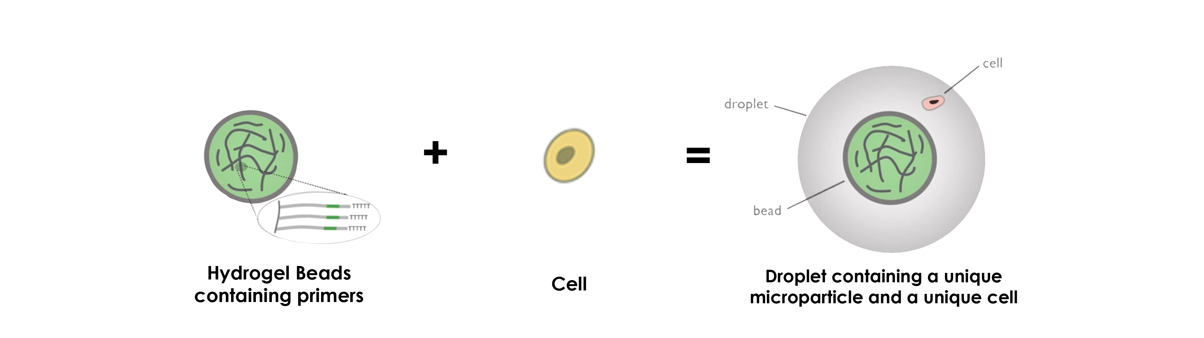 hydrogel-beads-microparticles-drop-seq-microfluidics-single-cells-analysis-ARN-AND-barcode-complex-tissue