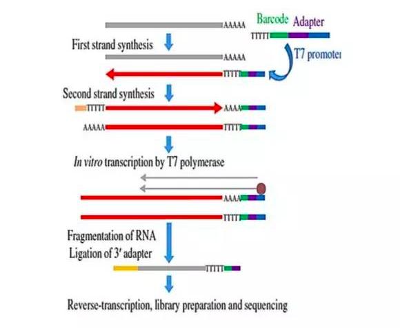 Drop-seq单细胞测序以及其他单细胞测序方法汇总讲解