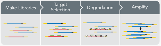 单细胞转录组测序技术原理